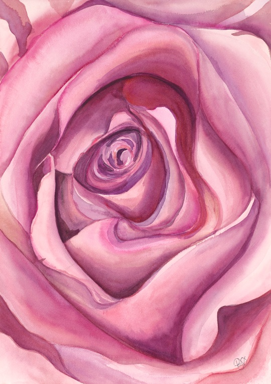 Pink Rose Watercolor on 140lb Arches watercolor paper 16 X 20  $200.00